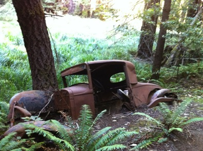 old car left in the redwoods